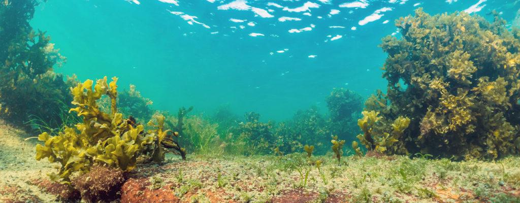 Tvärminnen uudessa tutkimuskeskuksessa yhdistetään meren ja ilmaston tutkimus